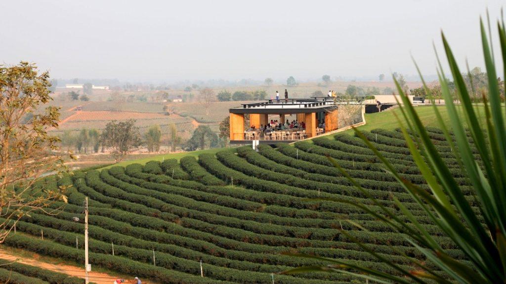 Choui Fong Tea Plantation visit