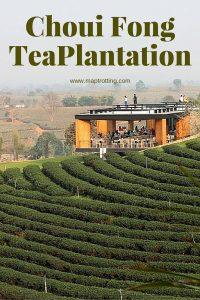 Choui Fong Tea Plantation, Chiang Rai, Thailand