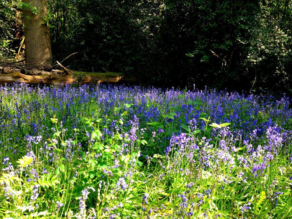 4 amazing National Trust properties to visit near London - Petts Wood & Hawkwood, Kent, England