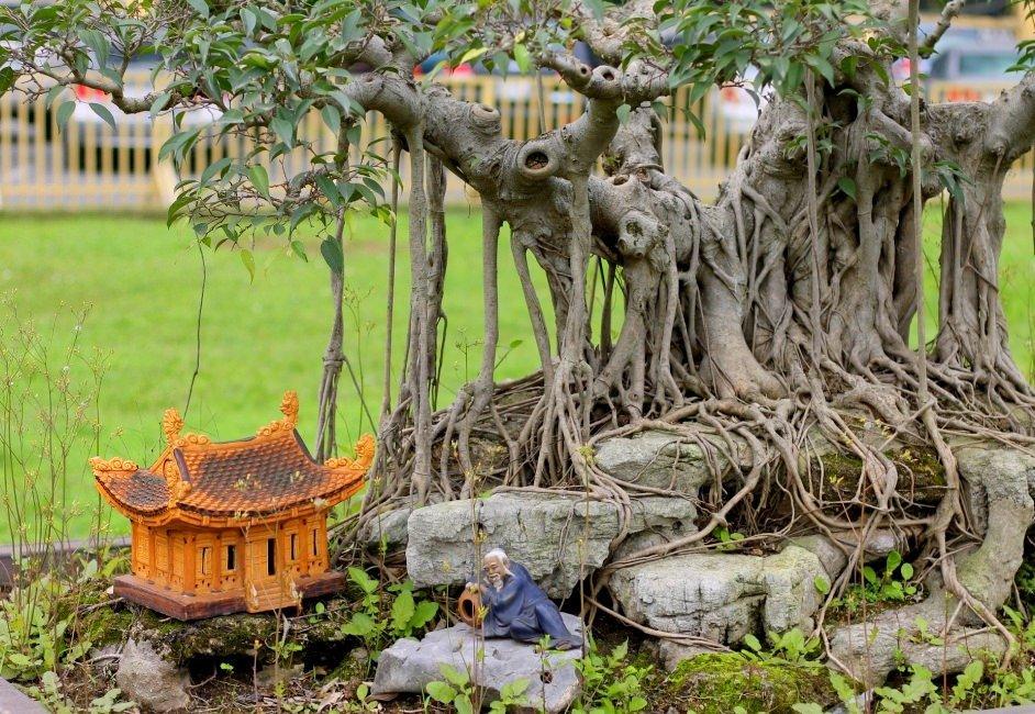 Bonsai trees at Hanoi Imperial Citadel