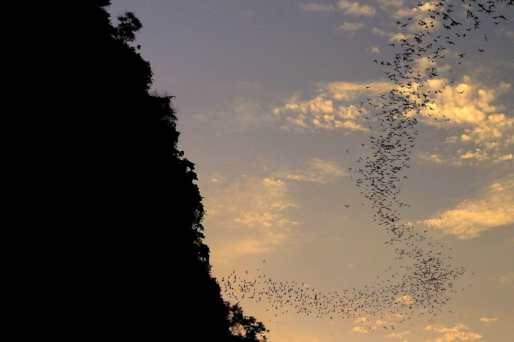 The ultimate thing to do in Battambang - watch the bat show underneath the Bat Cave